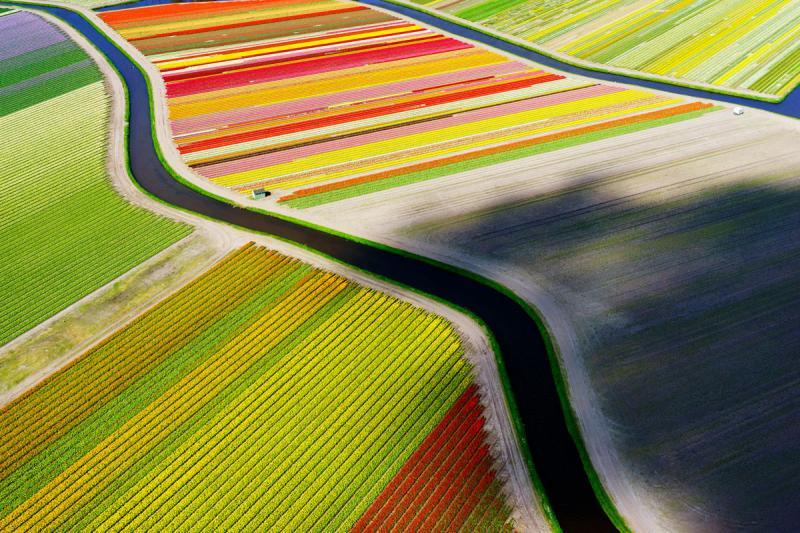 Voorhout, Netherlands tulip fields