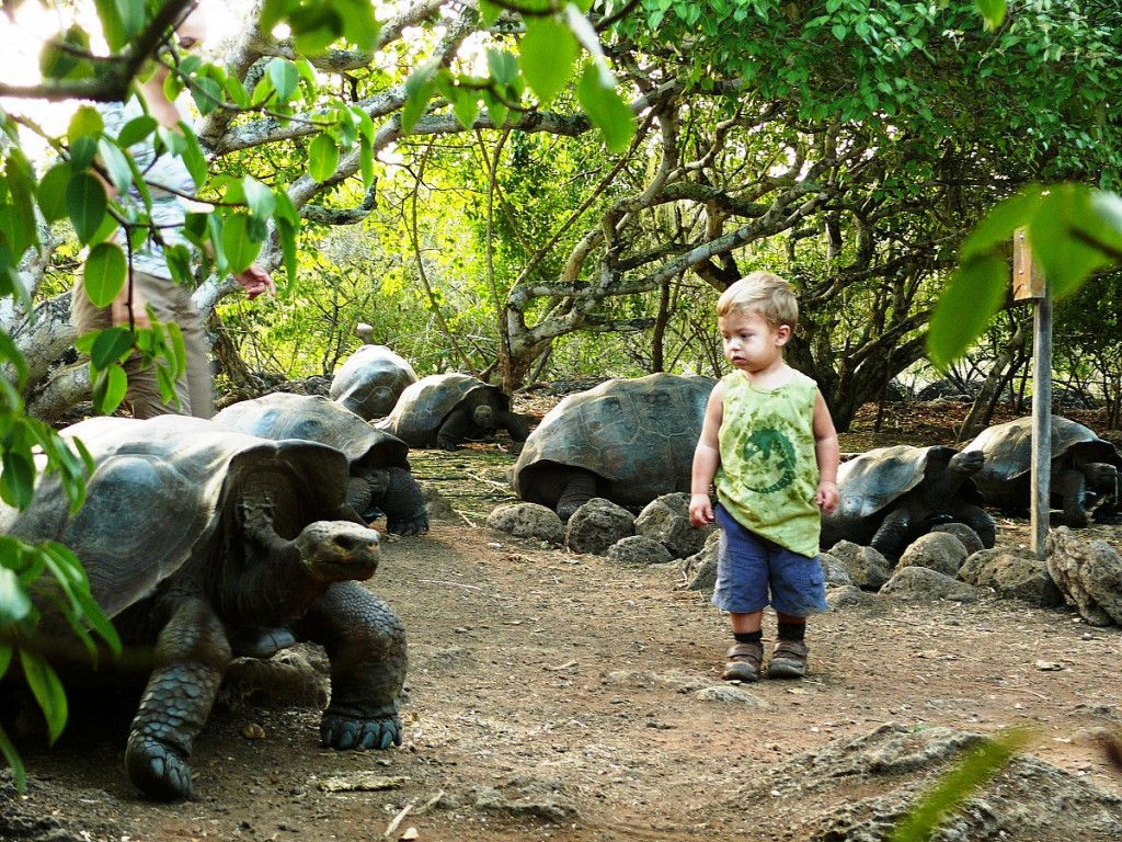 Giant Tortoise and boy, San Cristobal