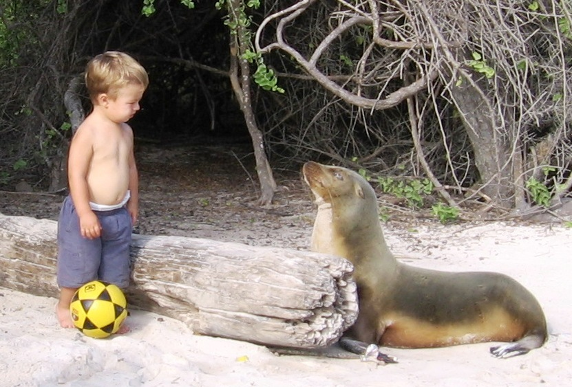 Soccer ball, two year old and sea lion pup at Puerto Chino, San Cristobal
