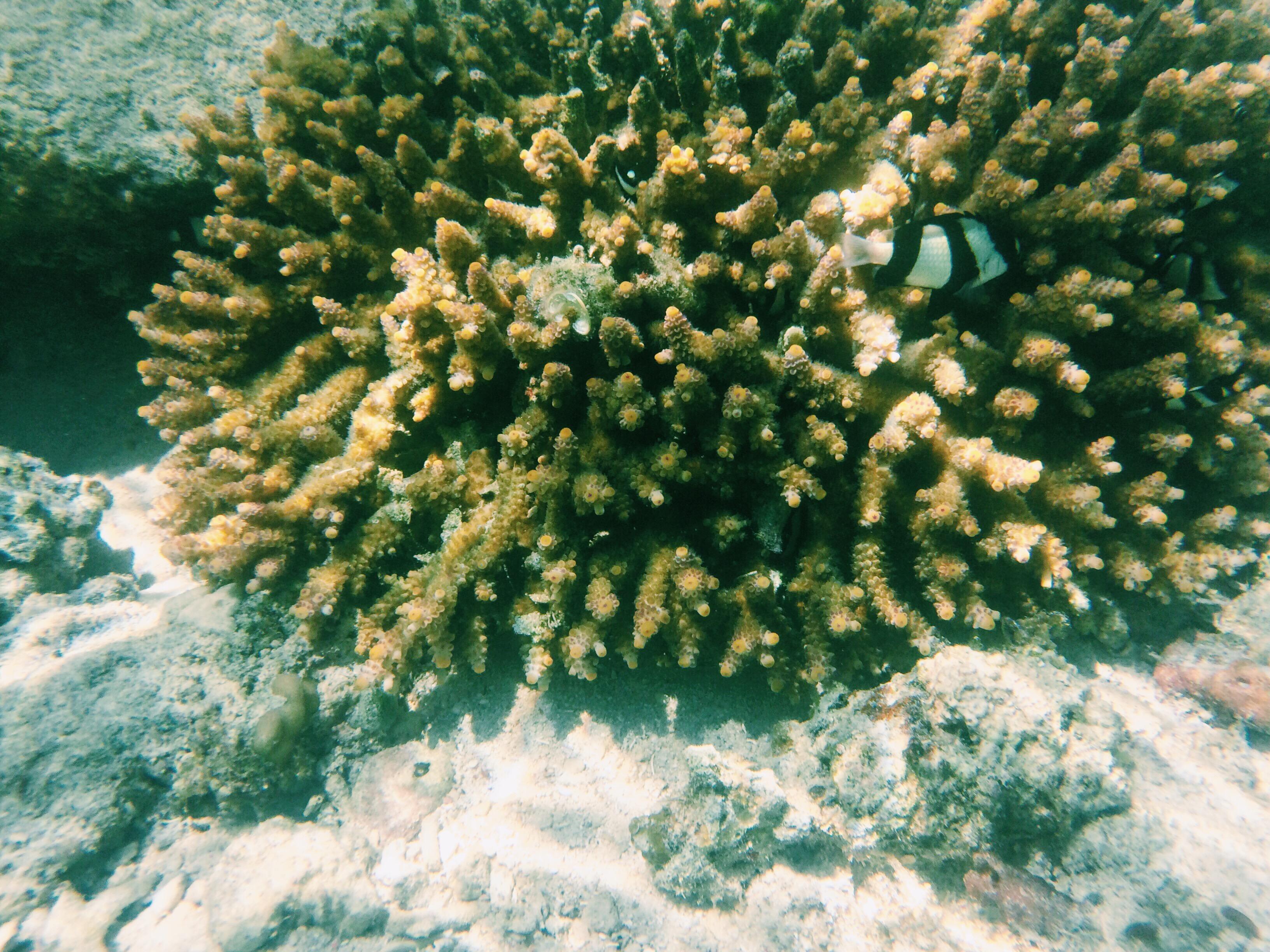 Tubod Marine Sanctuary, Siquijor
