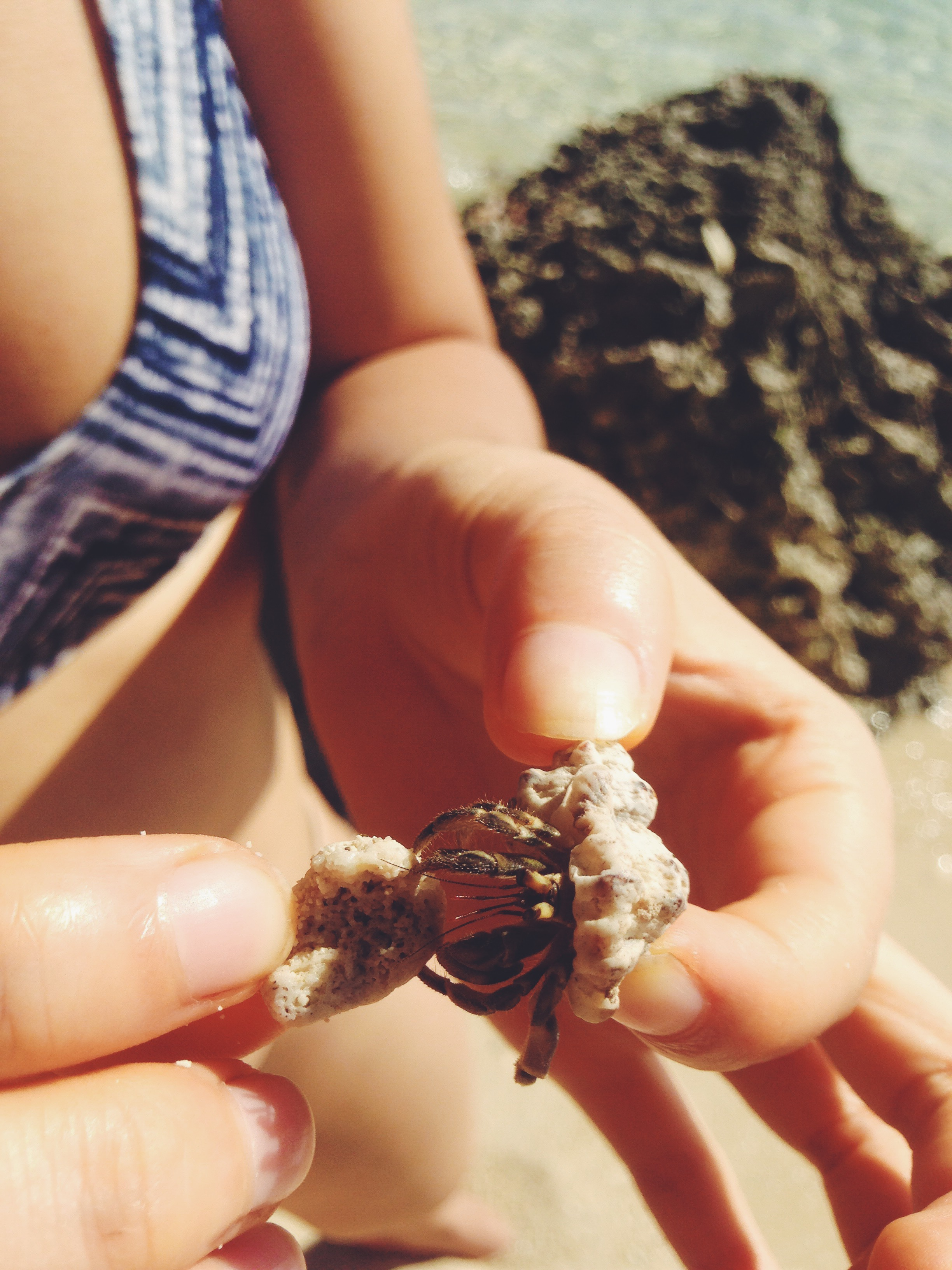This hermit crab was vicious! Lil sucker pinched me so hard.