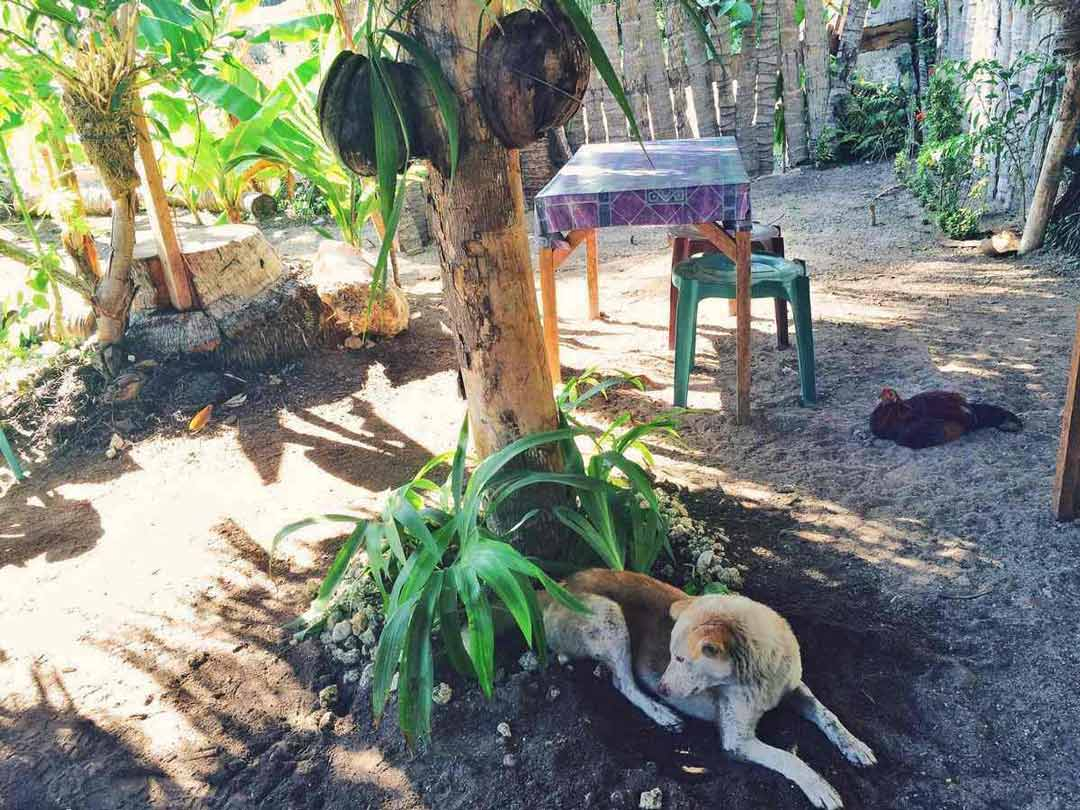A Rooster & Dog in Siquijor