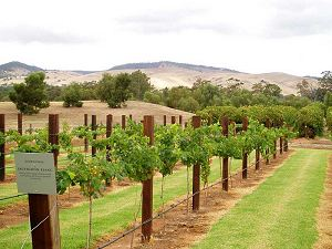 Barossa Valley, wine country northeast of Adelaide