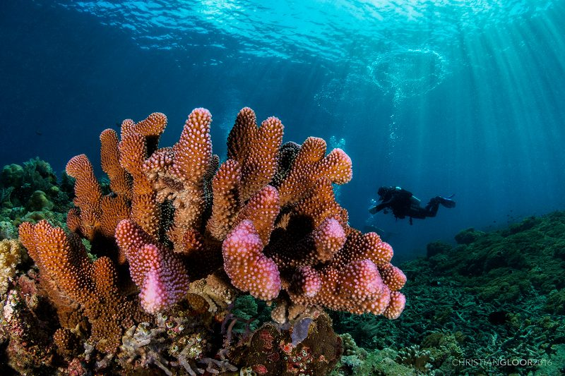 Coral reef in Bunaken, Indonesia