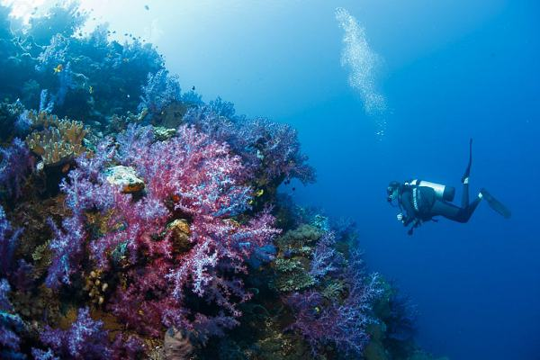 Scuba diving near Vanua Levu - courtesy Savasi Island Resort