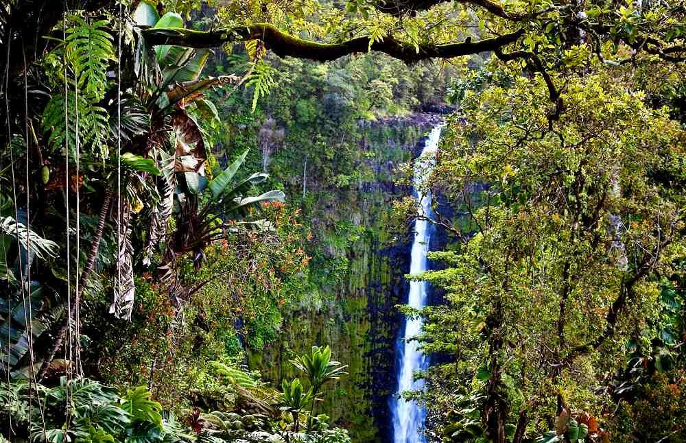 Akaka Falls State Park Big Island Of Hawaii Reviews
