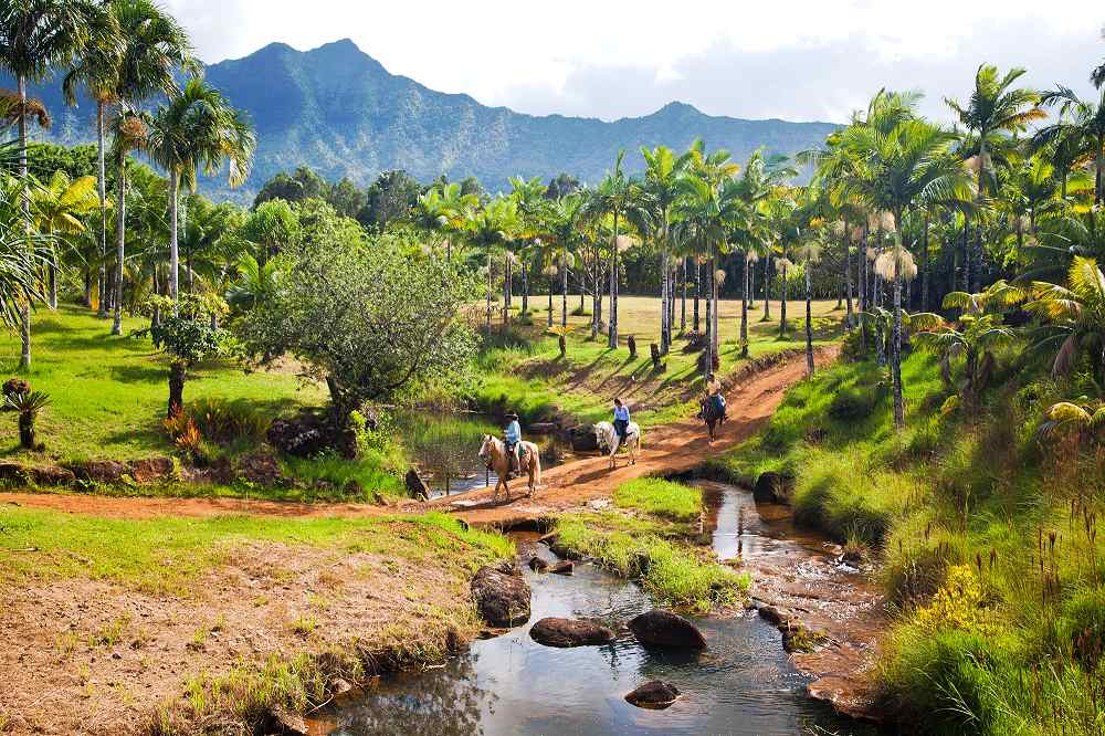 Horseback Riding Through a Palm Grove - Horseback Riding on Kauai. Copyright Hawaii Tourism Authority (HTA) / Tor Johnson.