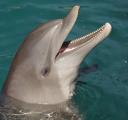 Moorea Dolphin Center French Polynesia Reviews