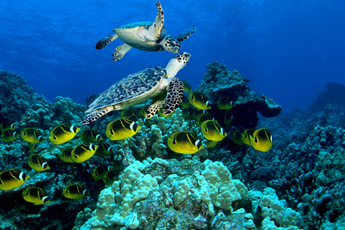 Topdive Scuba Trips French Polynesia Reviews Pictures