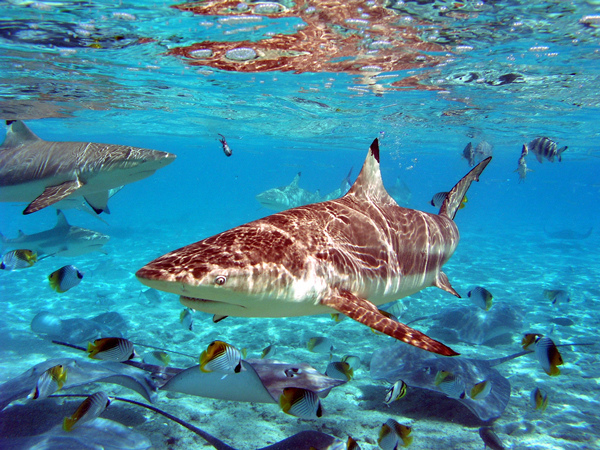 Information - Shark and Ray Snorkeling Safari.