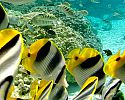 Snorkeling and Scuba Diving - Le Taha'a Island Resort & Spa