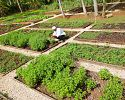 Organic herb garden - Couples Swept Away