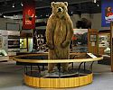 Otto the Bear - University of Alaska Museum of the North