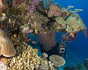 Scuba Diving - Qamea Resort and Spa