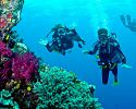 Scuba diving - Tides Reach Resort